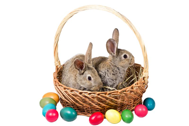 Two easter gray bunnies in a basket with eggs, isolate stock photo