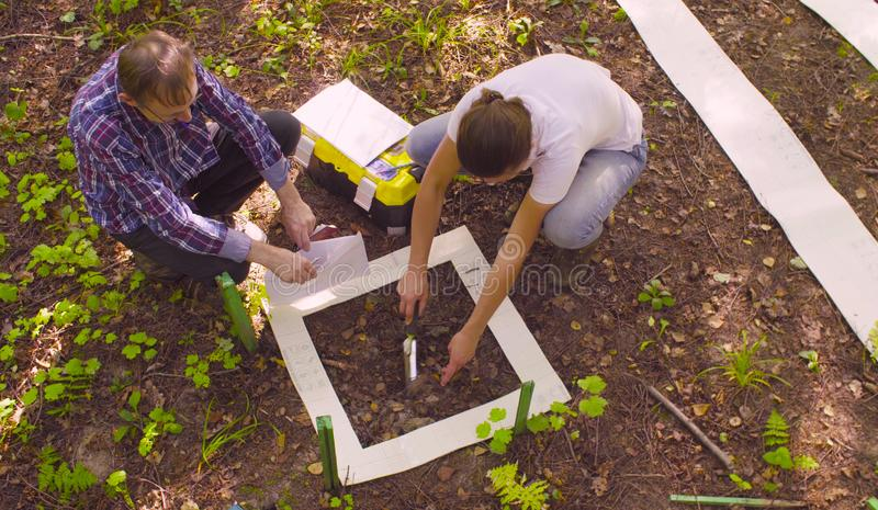 Two ecologist getting samples of soil in the forest. Top view. Two ecologist getting samples of soil in the forest inside square marking site. Field work royalty free stock images