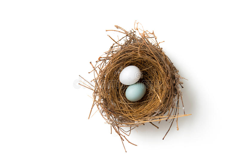 Two eggs in bird nest stock images