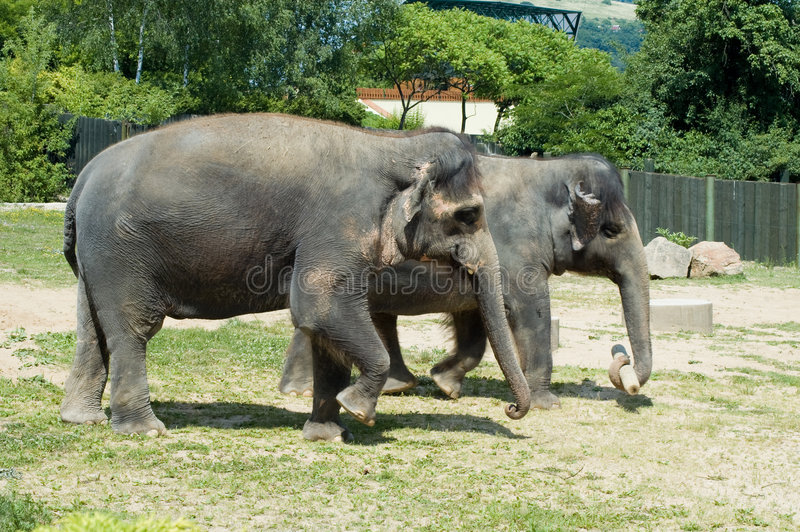 Download Two elephants stock image. Image of green, young, animal - 9189499