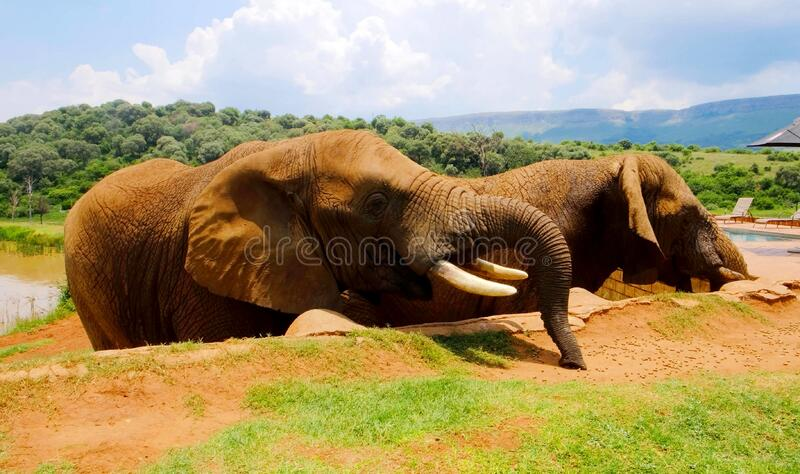 Two elephants next to an hotel stock images