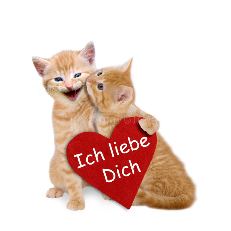 Two enamored cats with red heart on valentine. Two enamored cats with red heart on white background royalty free stock photo