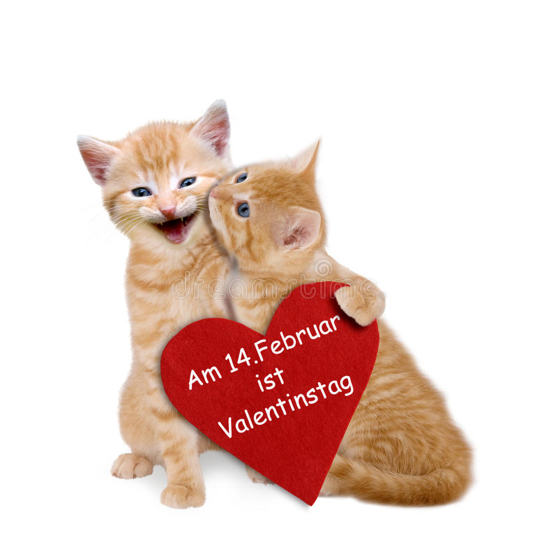 Two enamored cats with red heart on valentine. Two enamored cats with red heart on white background stock image