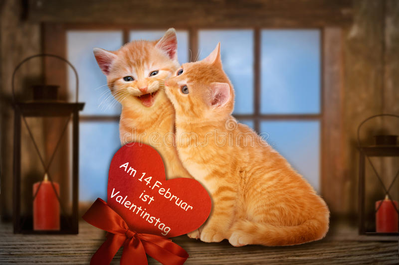 Two enamored cats on Valentine. Two enamored cats with red heart kissing in front of window royalty free stock photography