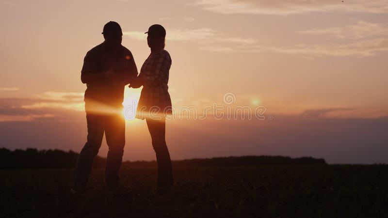 Two farmers work in the field in the evening at sunset. A man and a woman discuss something, use a tablet. royalty free stock images