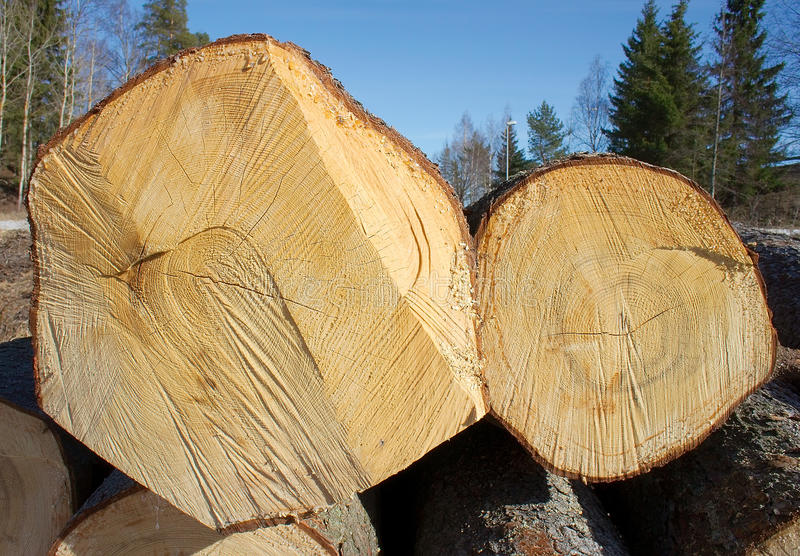 Download Two felled tree trunks stock photo. Image of lumber, dendroclimatology - 19120852