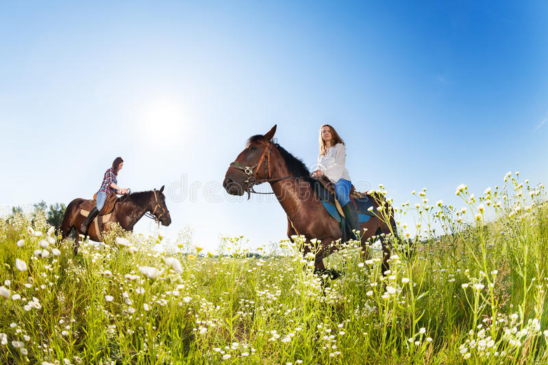 Two female equestrians in the flowery meadows. Two female equestrians riding purebred horses in the flowery meadows at sunny day stock image