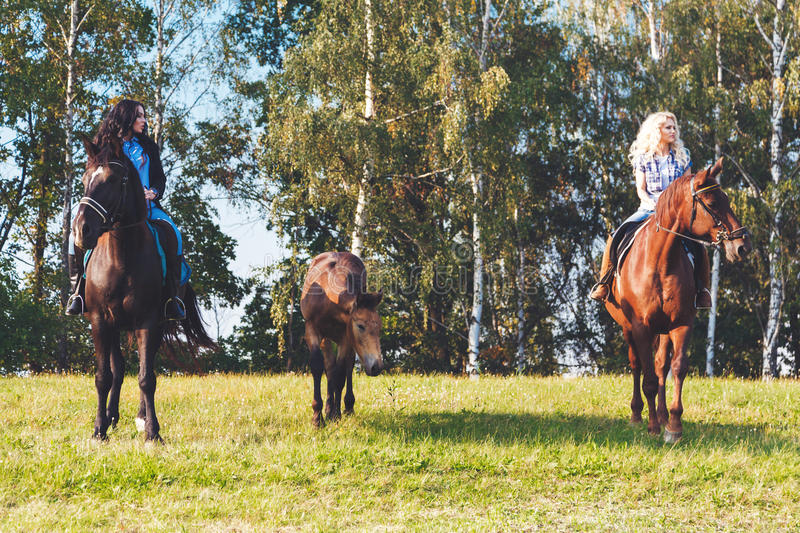 Two female equestrians with purebred brown horses and foal between them.  stock photos
