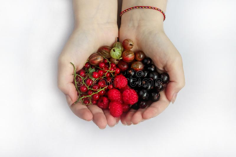 Two female hands hold a bunch of raspberry, red and black currant and gooseberry berries stock images