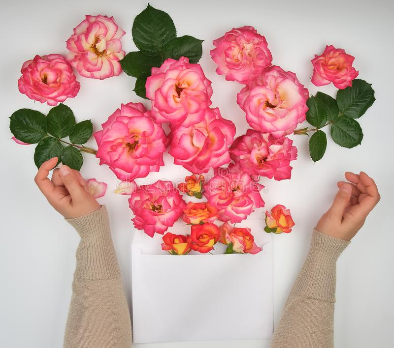 Two female hands and a paper envelope with buds of pink roses. On a white background, top view royalty free stock photo