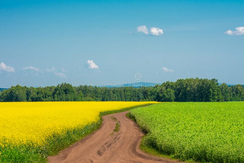 Two fields are yellow and green and the road. Between them stock photo