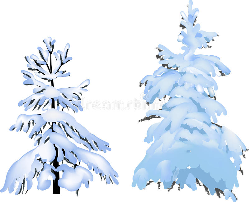Two firs in snow isolated on white vector illustration
