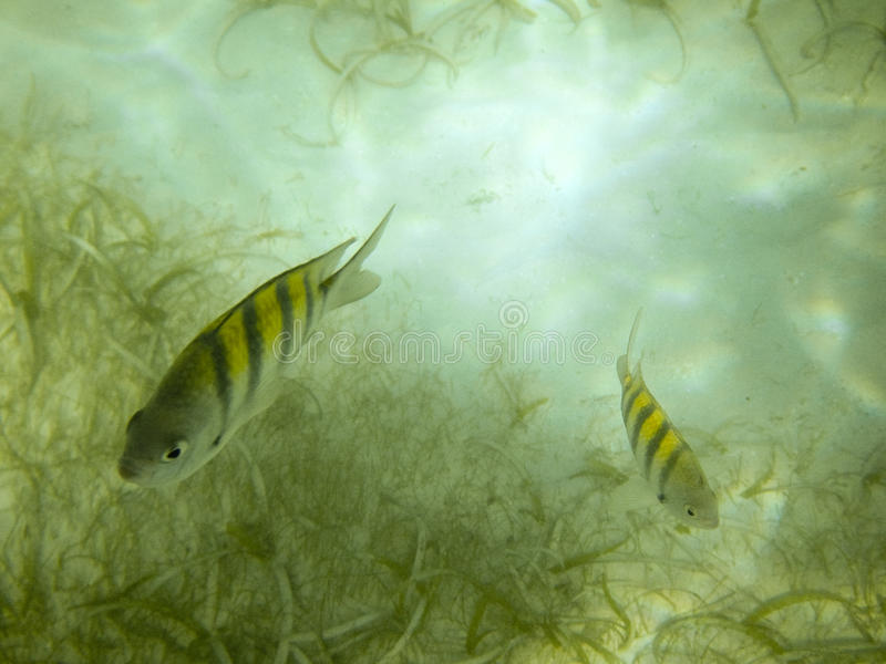 Two fish royalty free stock images