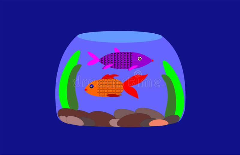 Two fish in a small round aquarium. royalty free stock image