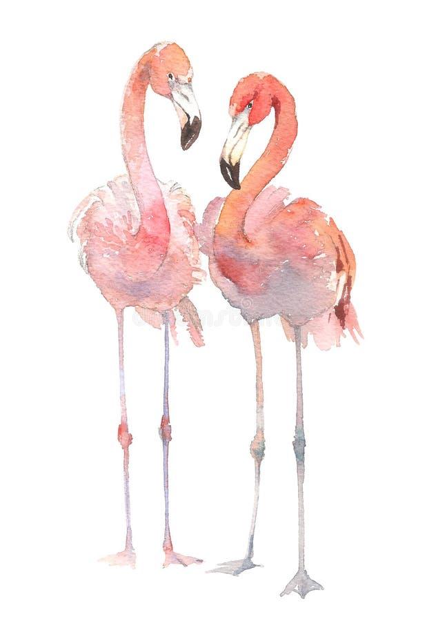 Free Two Flamingo Isolated On White Background. Watercolor Hand Drawn Illustration. Rastra. Stock Image - 108818901