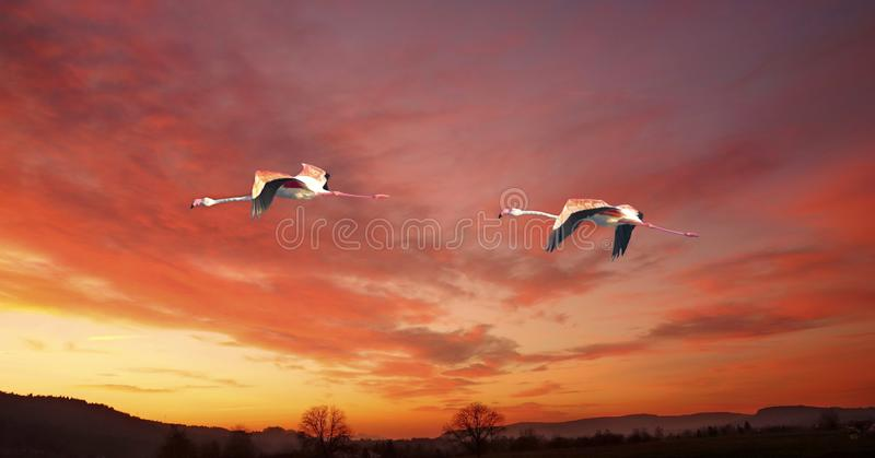 Two flamingos flying at sunset over a forest royalty free stock photo
