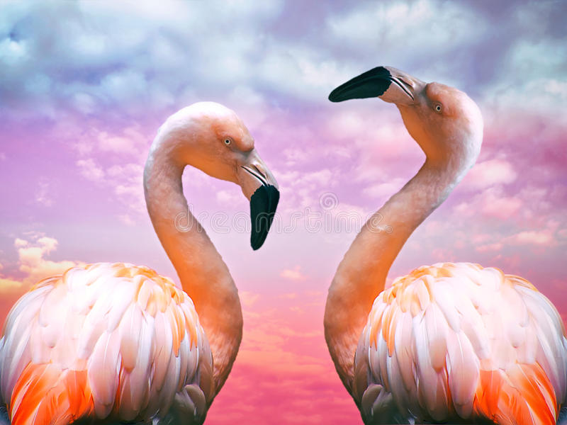 Two flamingos stock image