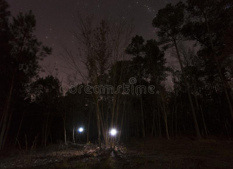 Two flashlights coming from the forest royalty free stock photos