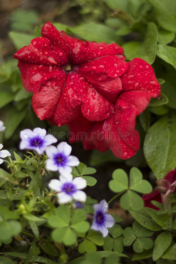 Two floral heart royalty free stock image