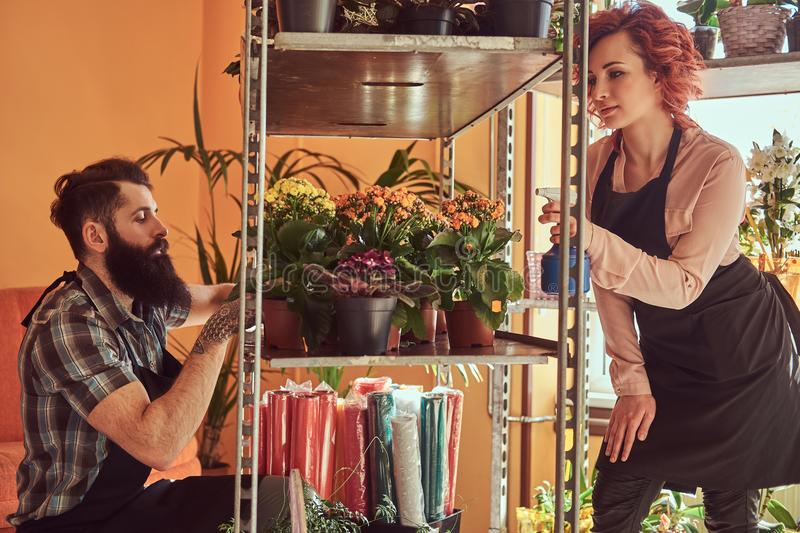 Two florists, beautiful redhead female and bearded male wearing uniforms working in flower shop. royalty free stock photos