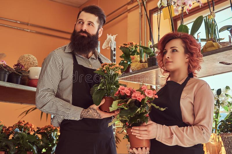 Two florists, beautiful redhead female and bearded male wearing uniforms working in flower shop. royalty free stock image