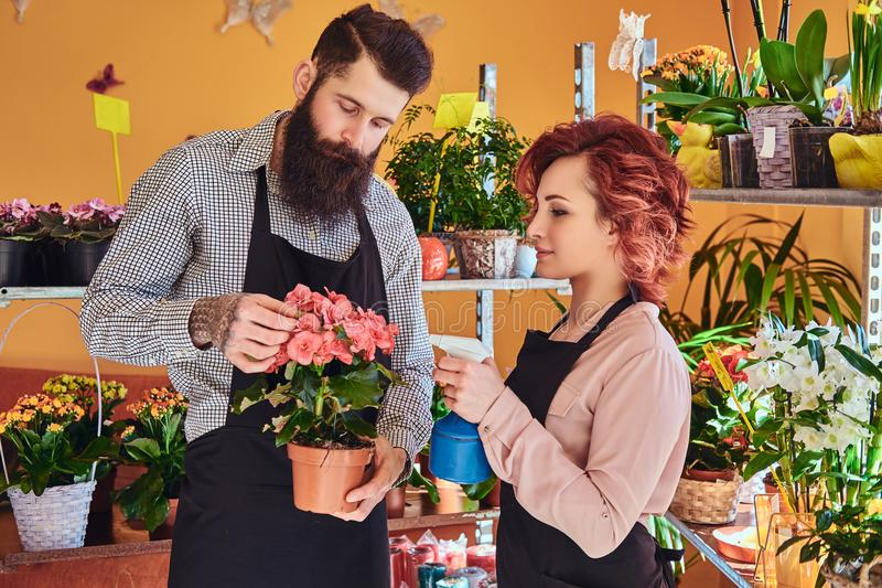 Two florists, beautiful redhead female and bearded male wearing uniforms working in flower shop. stock photography
