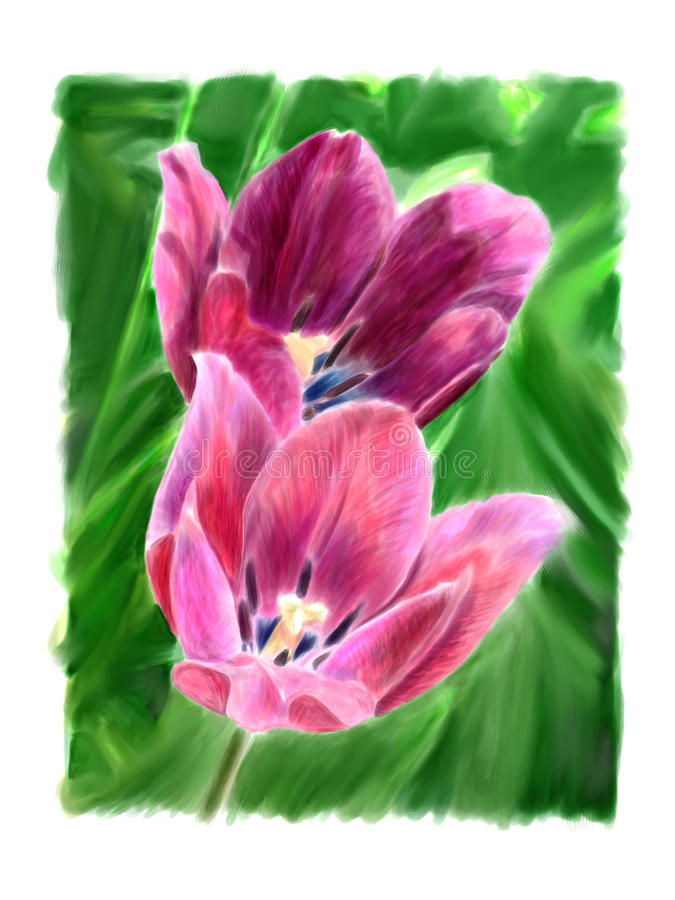 Download Two flowering tulip stock illustration. Image of petals - 29697423