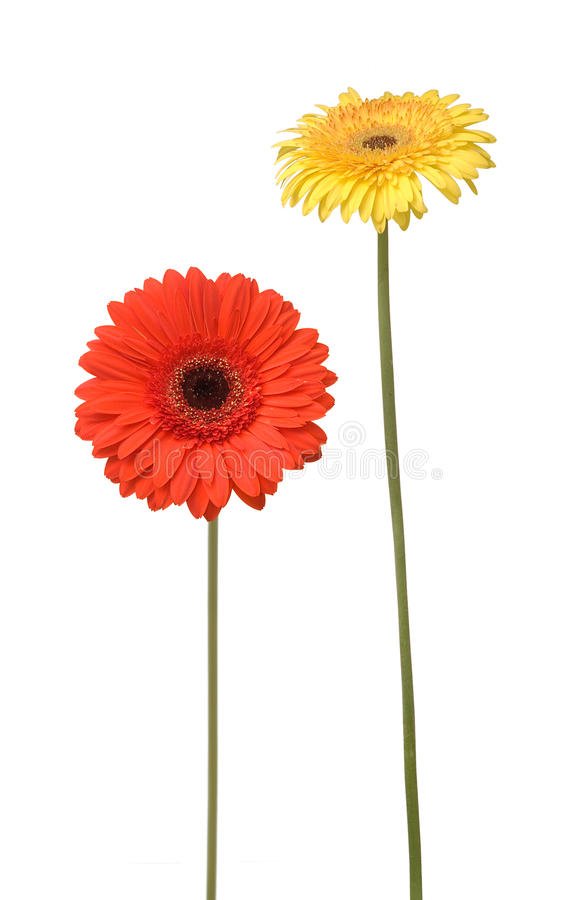 Two flowers royalty free stock image