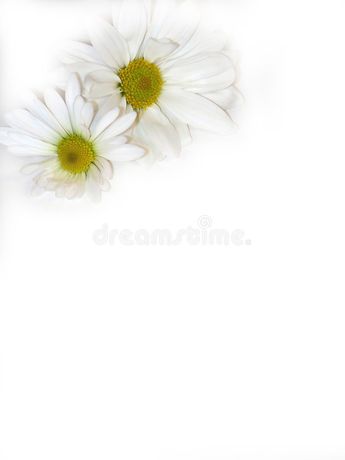 Two flowers. stock photo