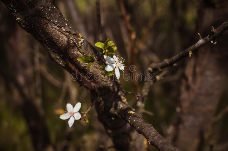 Two flowers growing out of a tree crown. Peace. Love. royalty free stock photo