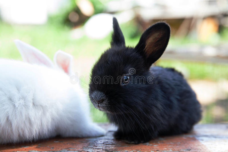 Two fluffy black white rabbits. Easter bunny concept. close-up, shallow depth of field, selective focus royalty free stock images
