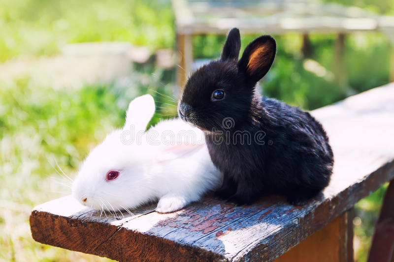 Two fluffy black white rabbits. Easter bunny concept. close-up, shallow depth of field, selective focus stock photos