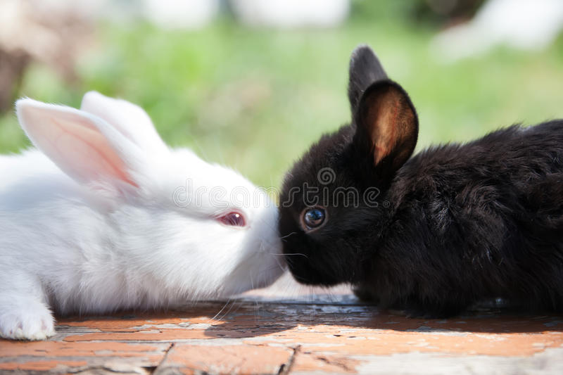 Two fluffy black white rabbits. Easter bunny concept. close-up, shallow depth of field, selective focus stock photo