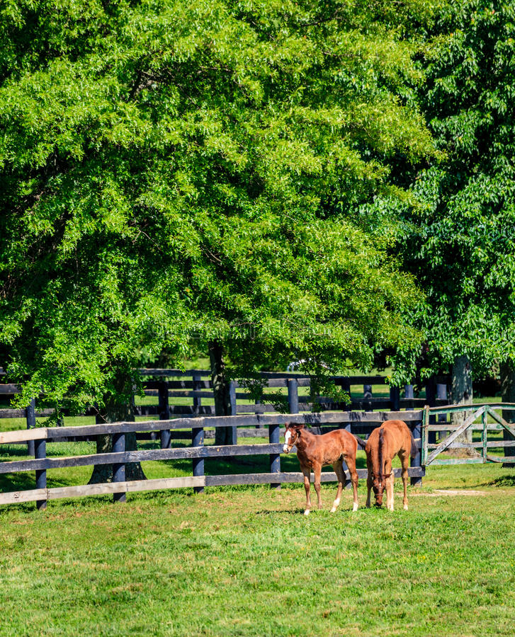 Download Two foals at a farm stock photo. Image of grass, horse - 37004190