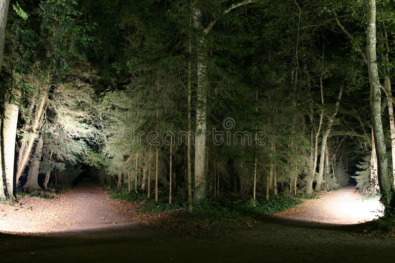 Download Two forest paths stock image. Image of europe, valley - 2394995