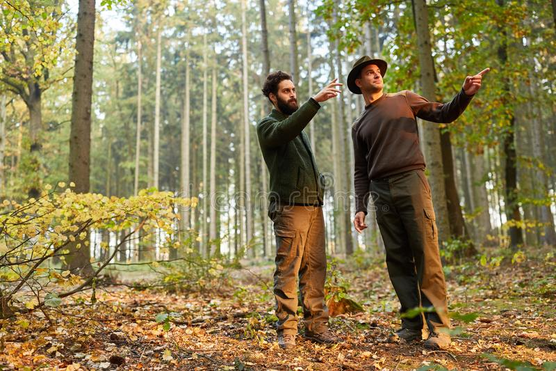 Two foresters discuss the forest care. In the forest district on a tour royalty free stock photos