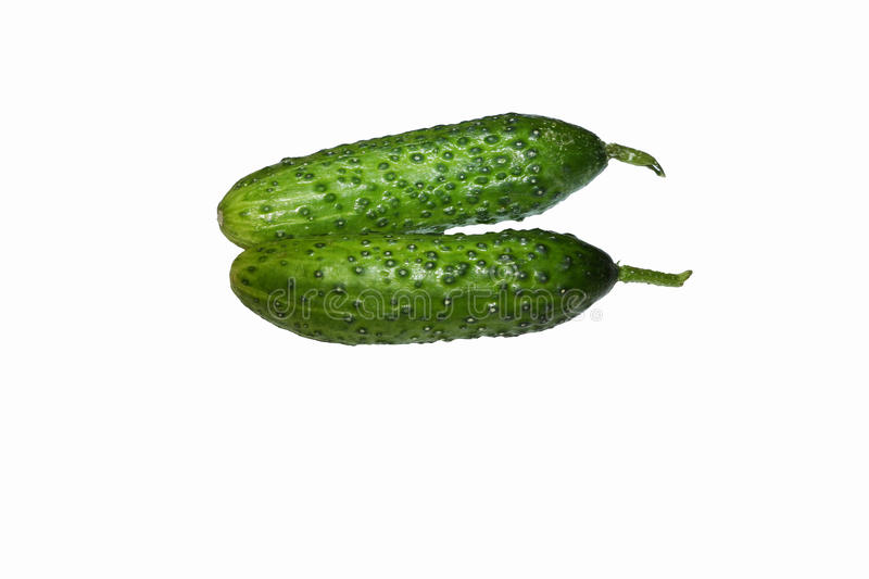 Two fresh cucumbers royalty free stock images
