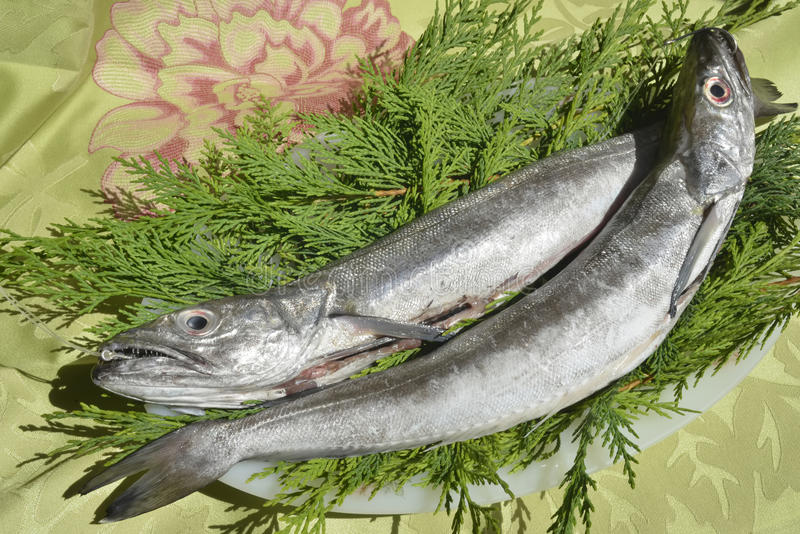 Two fresh European hake stock image