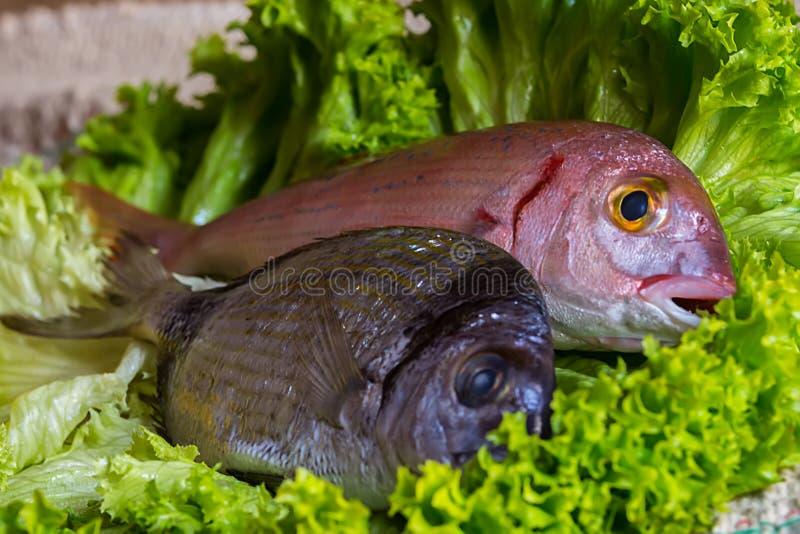 Two fresh meditarranean fish and a green salad. Two fresh fish and a green salad stock photography