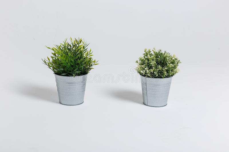 Two fresh green plants in small decorative metal buckets on a white background with a copyspace for a text. Ecological concept royalty free stock image