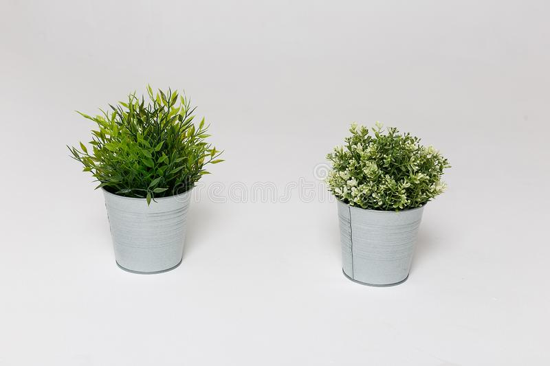 Two fresh green plants in small decorative metal buckets on a white background with a copyspace for a text. Ecological concept stock images
