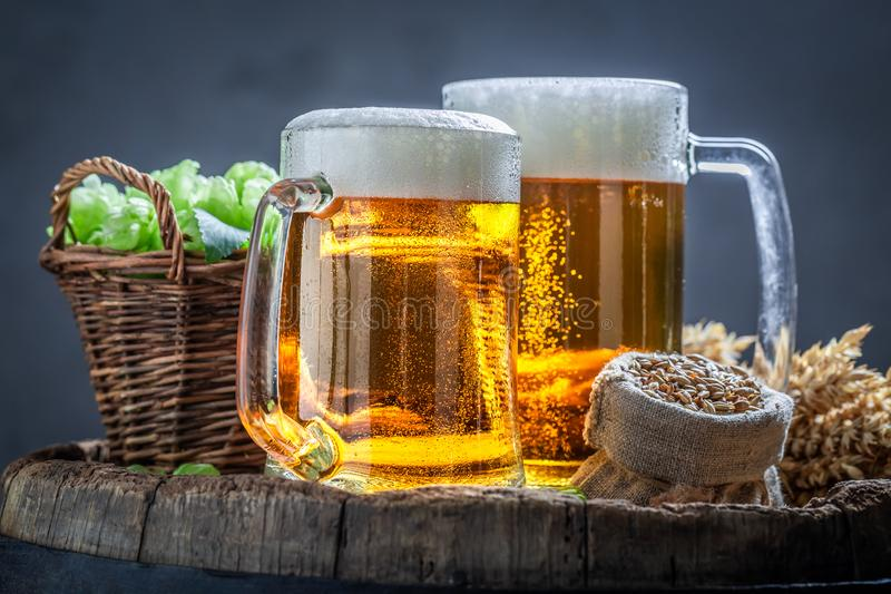 Two fresh light beers with foam, wheat and hops. On dark background royalty free stock photography
