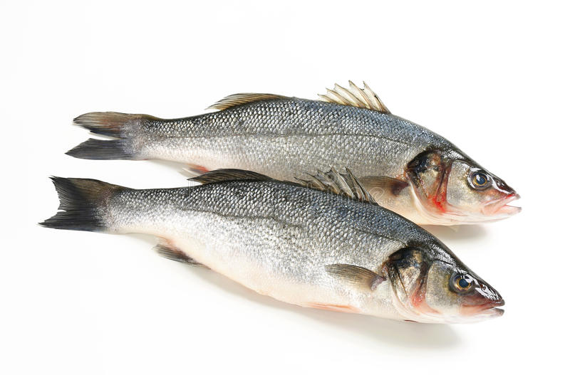 Two fresh sea bass fish royalty free stock photography