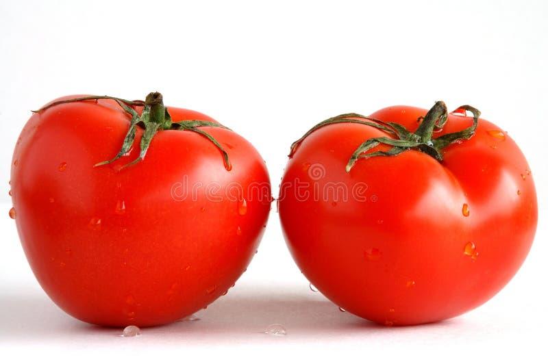 Two fresh tomatoes stock photos