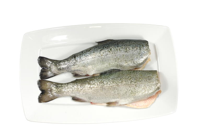 Download Two fresh trout stock photo. Image of salmo, fish, blue - 30038106
