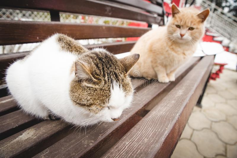 Two friendly cats on spring royalty free stock image