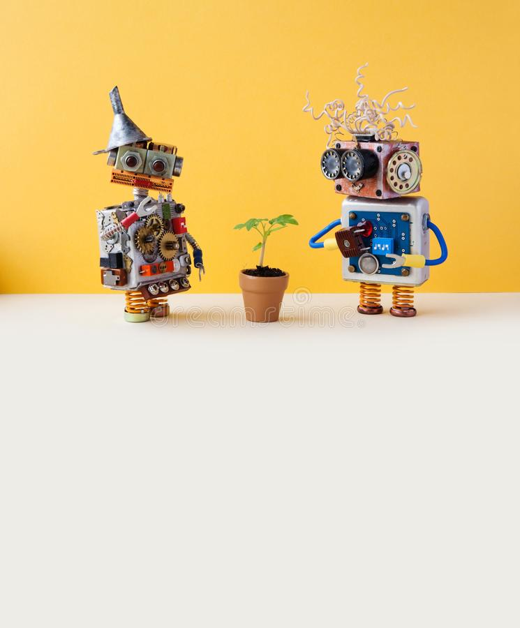 Two friendly robots and green plant in a flower clay pot. Technology versus organic life plant concept. Yellow wall. Background, white floor. Copy space royalty free stock image