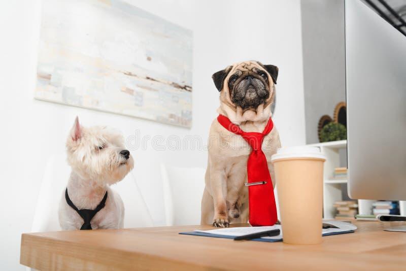 Business dogs in neckties stock photos