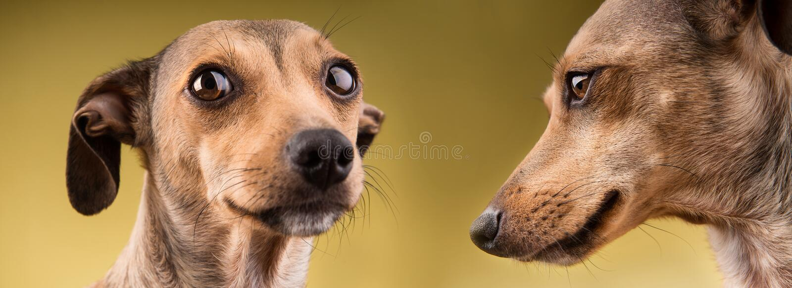 Two funny dogs portrait stock images