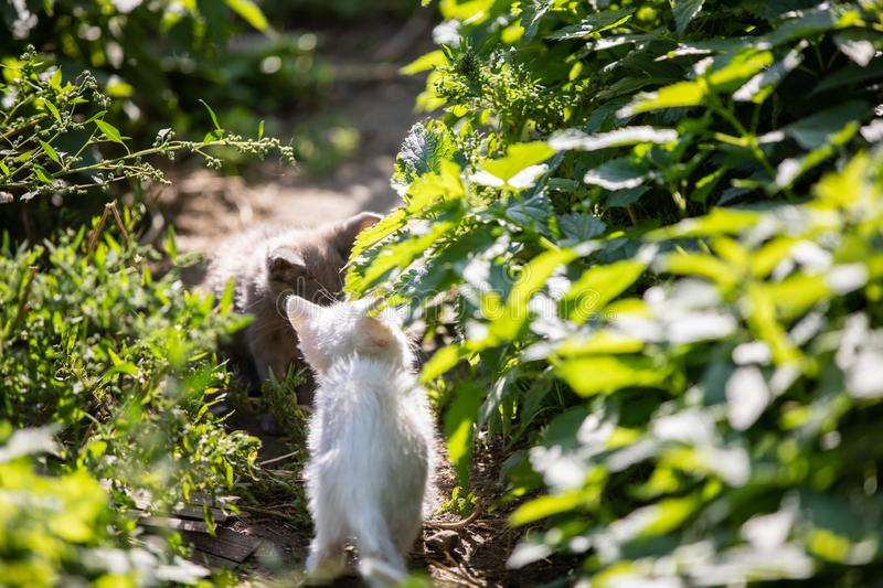 Two funny kittens in the grass on blurred background at morning. royalty free stock images